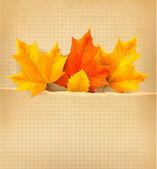Fondo con hojas de otoño. regreso a la escuela. vector illustrati — Vector de stock