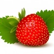 Strawberry with leaves . Vector. — Stock Vector