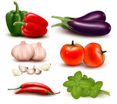 The big colorful group of vegetables. Vector illustration. — Stock Vector