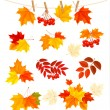 Autumn background with colorful leaves. Design elements. Vector  — Stock Vector