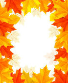 Autumn background with colorful leaves. Vector — Stock Vector