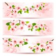 Three spring banners with blossoming sakura brunch with spring f — Stock Vector #40310779