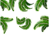Set green branches with leaves of palm trees. Vector. — Stock Vector