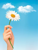 Beautiful white daisy in front of the blue sky. Vector. — Stock Vector