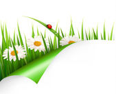 Spring background with flowers, grass and a ladybug. Vector. — Stock Vector