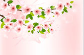 Spring background with blossoming sakura branches. Vector illust — Stock Vector