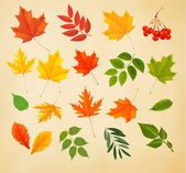 Set of colorful autumn leaves. Vector illustration.  — Stock Vector
