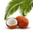 Coconut with palm leaves. Vector. — Stock Vector