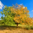 Stock Photo: Tree in two colors