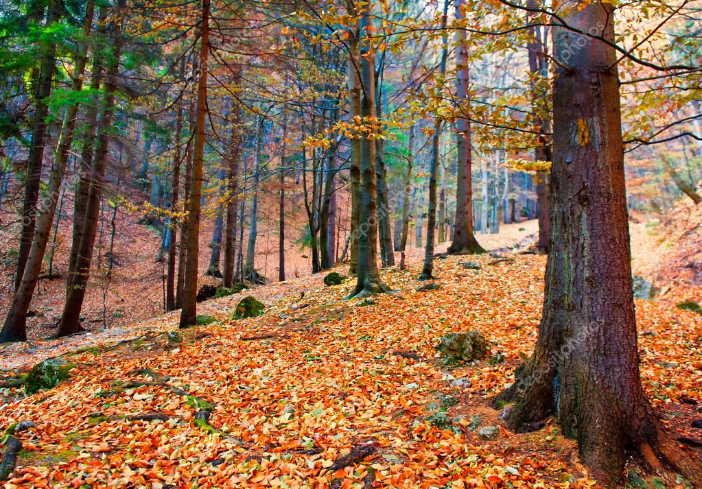 Autumn forest — Stock Photo #13705674