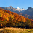 Stock Photo: The mountain`s autumn landscape photo