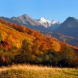 The mountain`s autumn landscape photo — Stock Photo #13879381