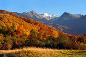 The mountain`s autumn landscape photo — Stock Photo