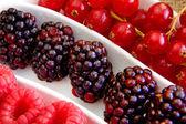 Taze berry meyve — Stok fotoğraf