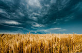 Storm dark clouds over field — Stock Photo