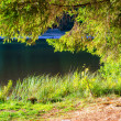 Stock Photo: Lake view under tree