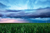 Ear of green wheat under a storm sky — Stock Photo