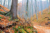 Autumn landscape in the woods — Stock Photo