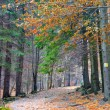 Autumn landscape in the woods — Stock Photo #43844385