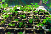 Plant cultivation in the greenhouse — Stock Photo