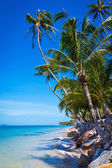 Coconut palms on background blue sky and sea — Stock Photo