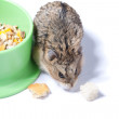 Hamster and its feeder — Stock Photo