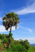 Palm trees on breakage pier — Stock Photo