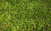 Green grass — 图库照片