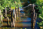 Thickets of the swamp — Stock Photo