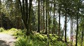 Bosque hermoso — Foto de Stock