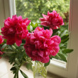 Peonies bouquet — Stock Photo