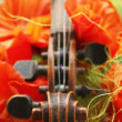 Beautiful violin — Stock Photo