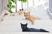 Homeless cute cats in Mykonos Island — Stock Photo
