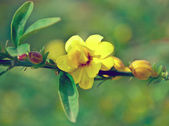 Yellow Flowers on Branch — Stock Photo