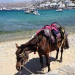 Horse on the beach — Stock Photo #27868867