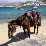 Horse on the beach — Stock Photo #27868873