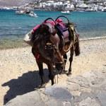 Horse on the beach — Stock Photo #27868877