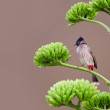 Sparrow on branch — Stock Photo