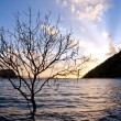 Tree in the sea — Stock Photo