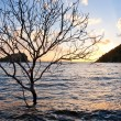 Stock Photo: Tree in the sea