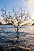 Tree in the sea — Stock Photo