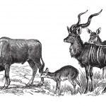 Wild deers — Stock Vector