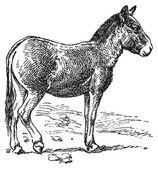 Donkey — Stockvector