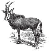 Wild goat — Stock Vector
