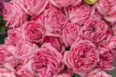 Beautiful Flowers — Foto Stock