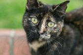 Roztomilý kočka — Stock fotografie