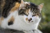 Street cat — Stock Photo