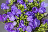 Vackra blommor — Stockfoto