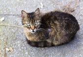 Street cat — Fotografia Stock