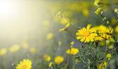 Fleurs de printemps magnifique — Photo